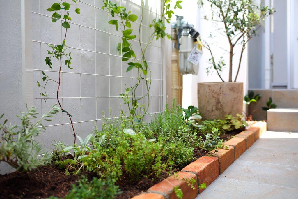 植物が育てられる小さな庭